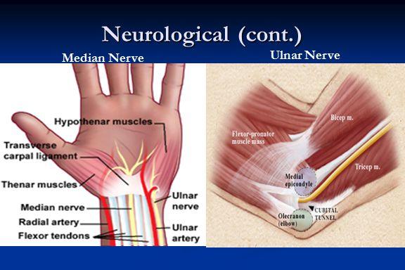 Neurological (cont.) Median Nerve Ulnar Nerve
