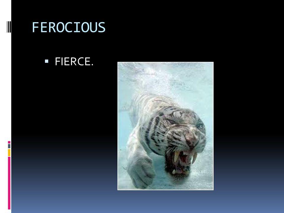 FEROCIOUS  FIERCE.