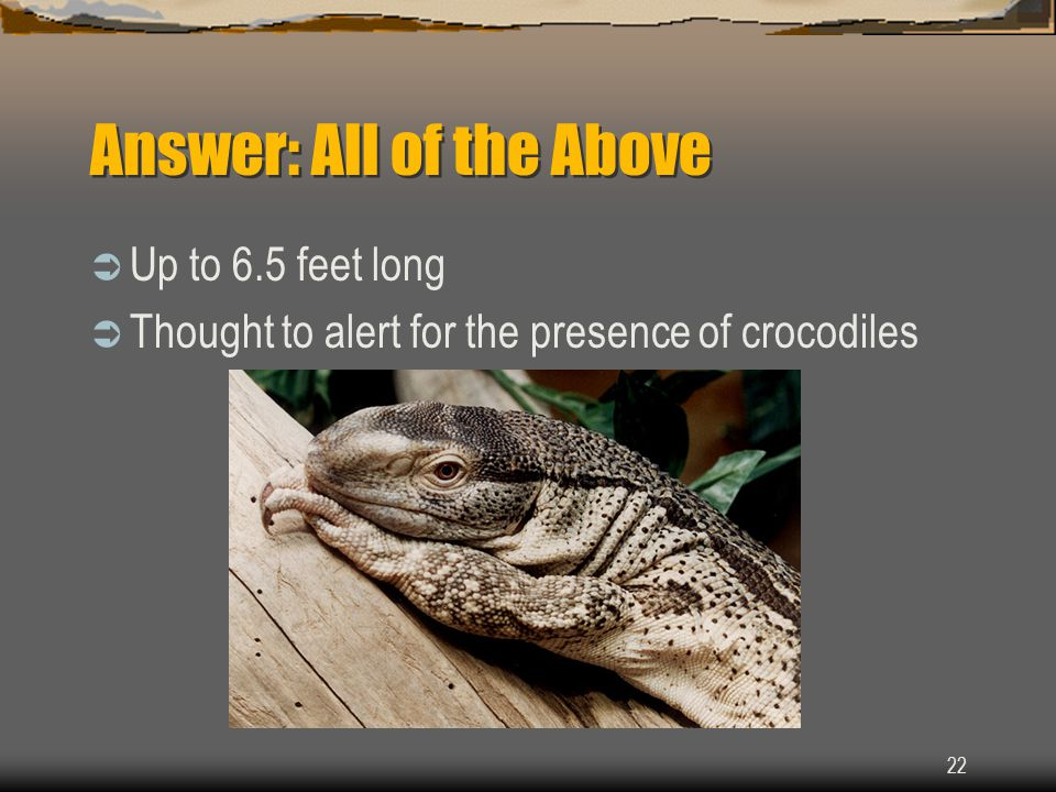 22 Answer: All of the Above  Up to 6.5 feet long  Thought to alert for the presence of crocodiles
