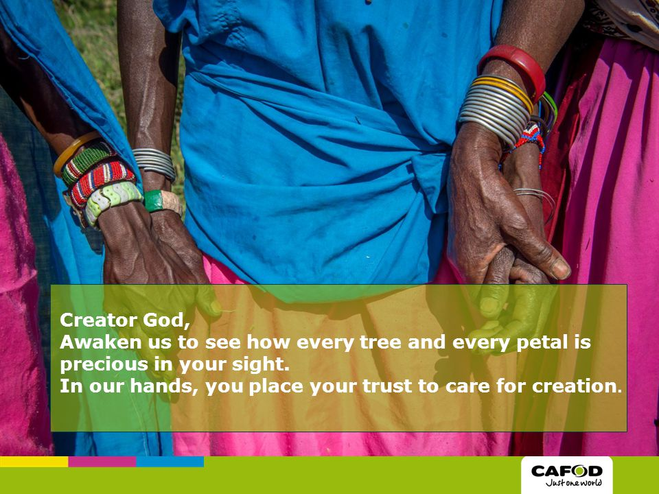 Creator God, Awaken us to see how every tree and every petal is precious in your sight. In our hands, you place your trust to care for creation.