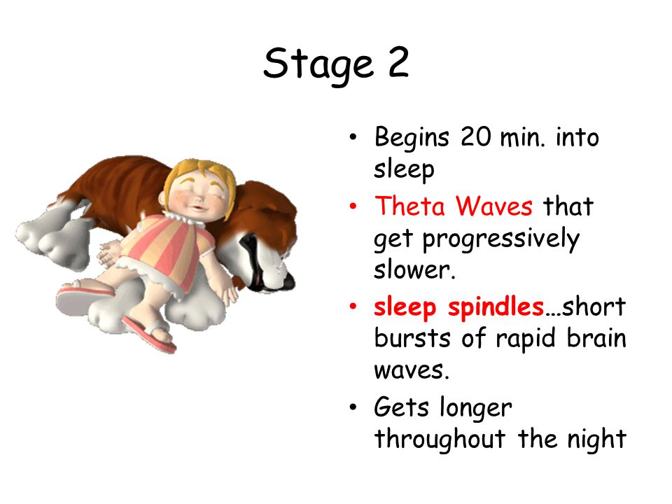 Stage 2 Begins 20 min. into sleep Theta Waves that get progressively slower. sleep spindles…short bursts of rapid brain waves. Gets longer throughout
