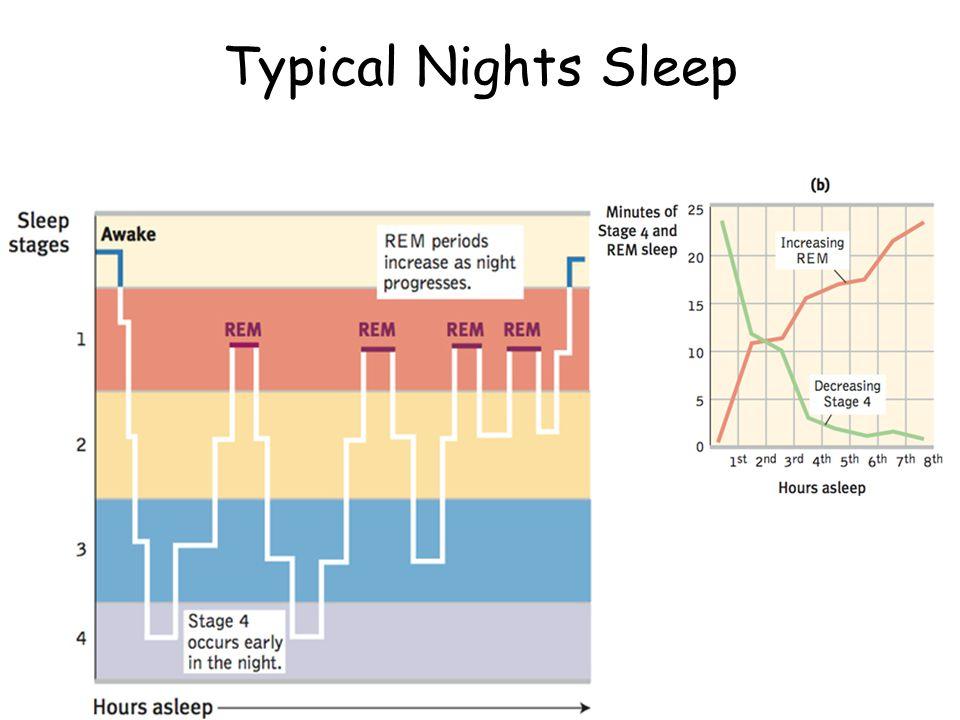 Typical Nights Sleep