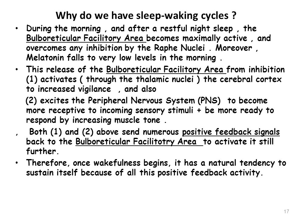 Why do we have sleep-waking cycles ? During the morning, and after a restful night sleep, the Bulboreticular Facilitory Area becomes maximally active,