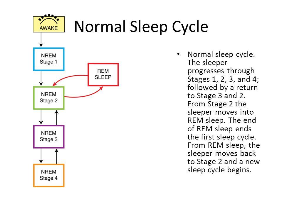 Normal Sleep Cycle Normal sleep cycle.