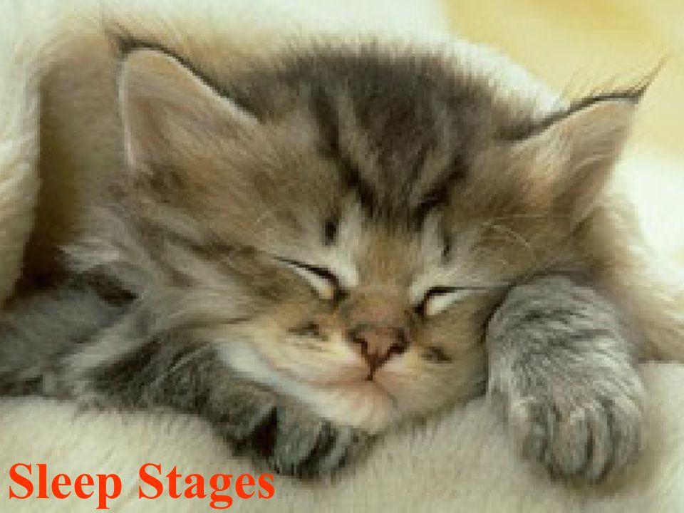 12 Sleep Stages