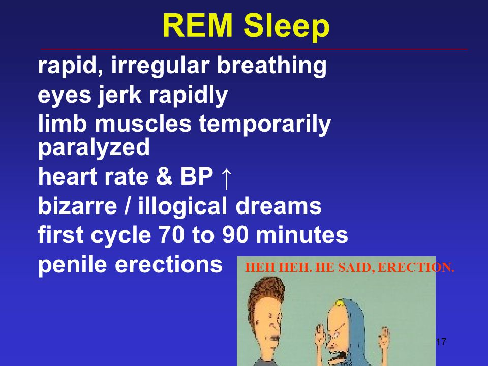 17 REM Sleep rapid, irregular breathing eyes jerk rapidly limb muscles temporarily paralyzed heart rate & BP ↑ bizarre / illogical dreams first cycle