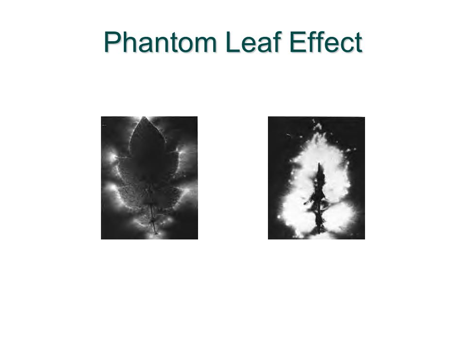 Phantom Leaf Effect