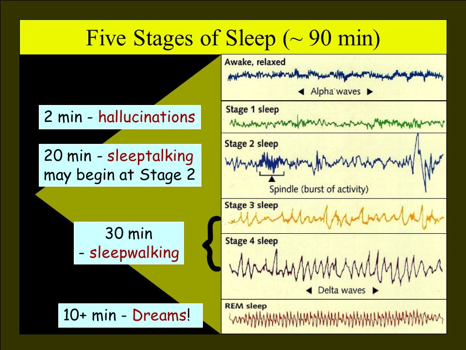 Rhythm of Sleep (the biological clock) Circadian Rhythm Body Temp Sleep/Wakefulness Mood Body Temp Sleep/Wakefulness Mood All are linked to a ± 25 hour day These slides are visually enhanced versions of those created by Dr.
