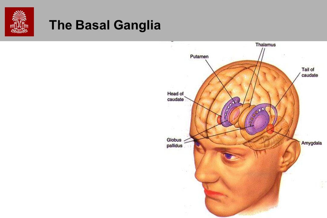 18 The Basal Ganglia