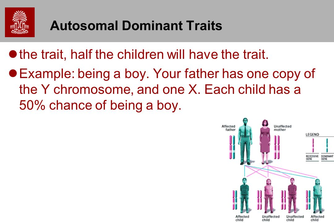 23 Autosomal Dominant Traits the trait, half the children will have the trait.