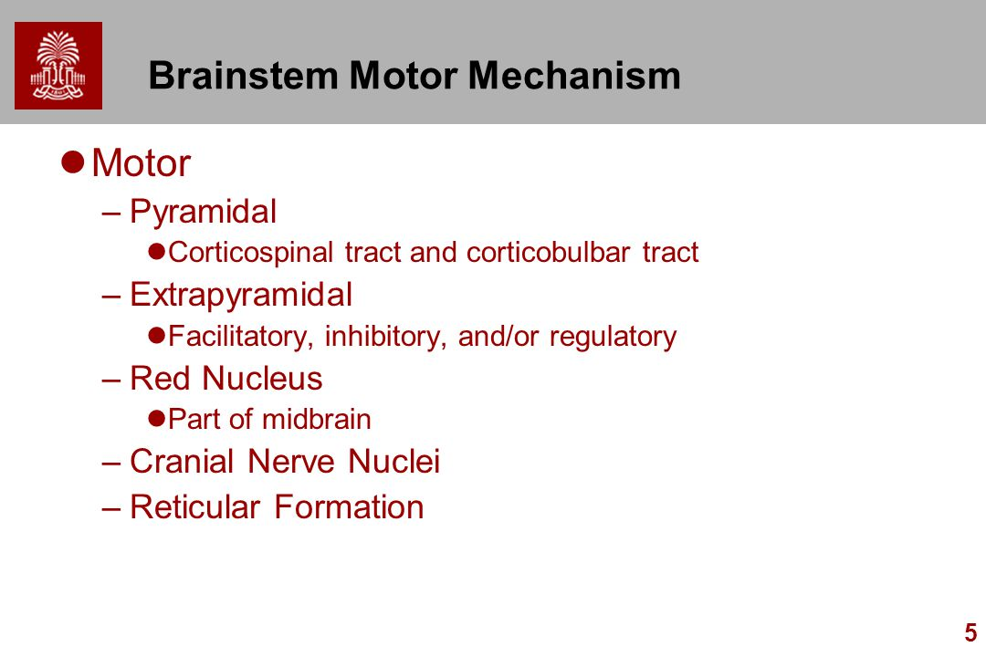 5 Brainstem Motor Mechanism Motor –Pyramidal Corticospinal tract and corticobulbar tract –Extrapyramidal Facilitatory, inhibitory, and/or regulatory –Red Nucleus Part of midbrain –Cranial Nerve Nuclei –Reticular Formation