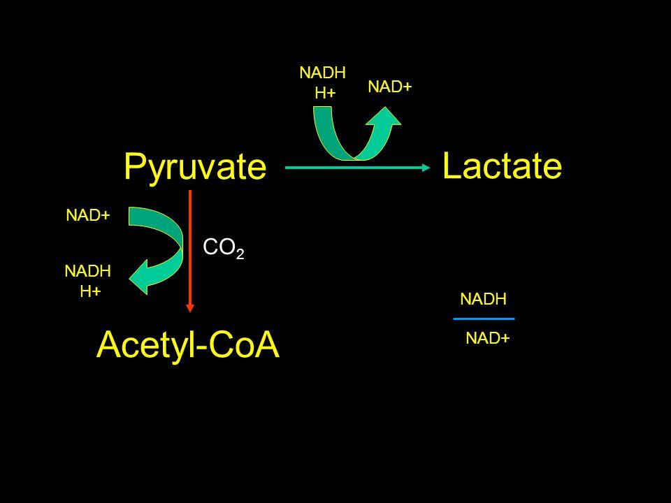 Pyruvate Lactate Acetyl-CoA CO 2 NAD+ NADH H+ NADH H+ NAD+ NADH NAD+