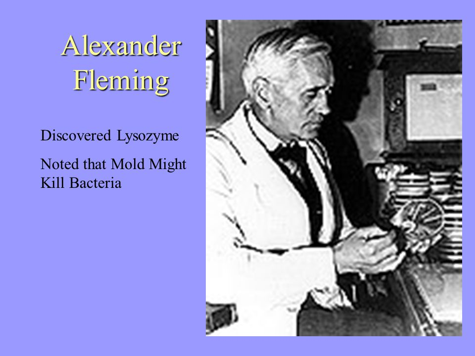 Alexander Fleming Discovered Lysozyme Noted that Mold Might Kill Bacteria