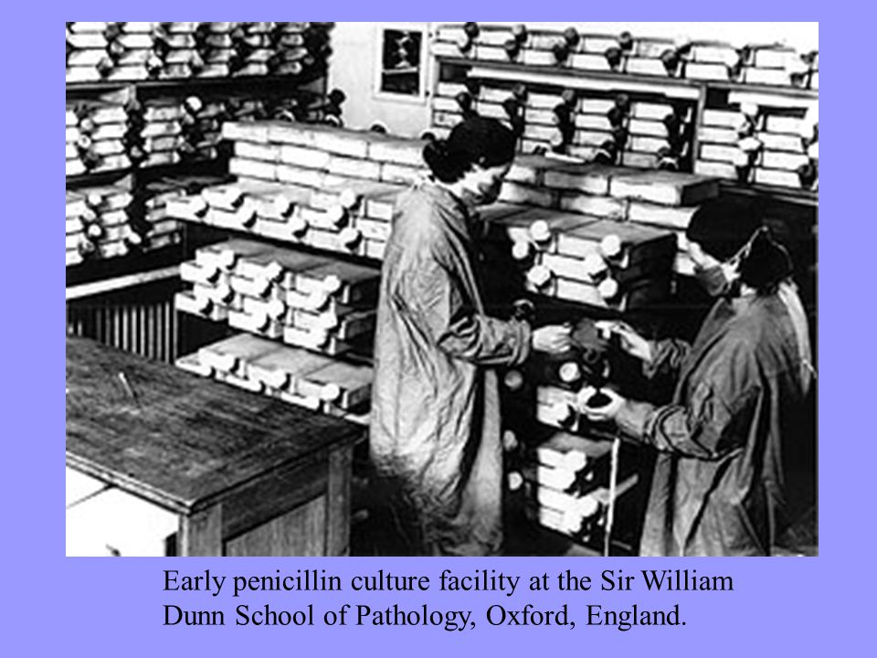 Early penicillin culture facility at the Sir William Dunn School of Pathology, Oxford, England.