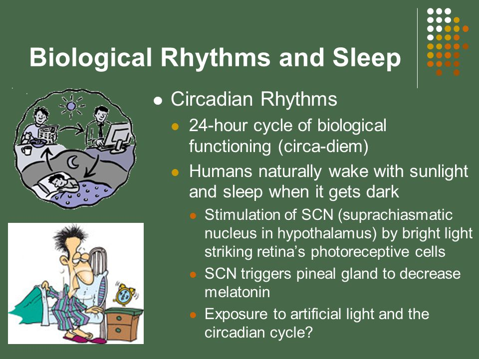 Biological Rhythms and Sleep Circadian Rhythms 24-hour cycle of biological functioning (circa-diem) Humans naturally wake with sunlight and sleep when it gets dark Stimulation of SCN (suprachiasmatic nucleus in hypothalamus) by bright light striking retina's photoreceptive cells SCN triggers pineal gland to decrease melatonin Exposure to artificial light and the circadian cycle