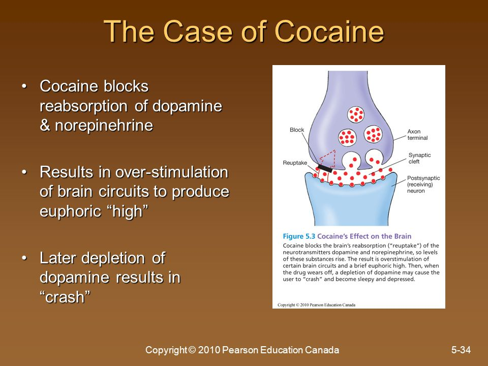 The Case of Cocaine Cocaine blocks reabsorption of dopamine & norepinehrineCocaine blocks reabsorption of dopamine & norepinehrine Results in over-stimulation of brain circuits to produce euphoric high Results in over-stimulation of brain circuits to produce euphoric high Later depletion of dopamine results in crash Later depletion of dopamine results in crash Copyright © 2010 Pearson Education Canada5-34