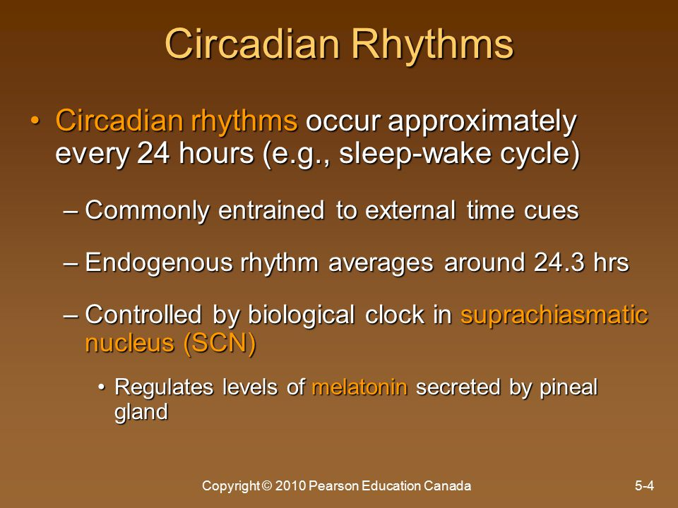 Copyright © 2010 Pearson Education Canada5-4 Circadian Rhythms Circadian rhythms occur approximately every 24 hours (e.g., sleep-wake cycle)Circadian rhythms occur approximately every 24 hours (e.g., sleep-wake cycle) –Commonly entrained to external time cues –Endogenous rhythm averages around 24.3 hrs –Controlled by biological clock in suprachiasmatic nucleus (SCN) Regulates levels of melatonin secreted by pineal glandRegulates levels of melatonin secreted by pineal gland