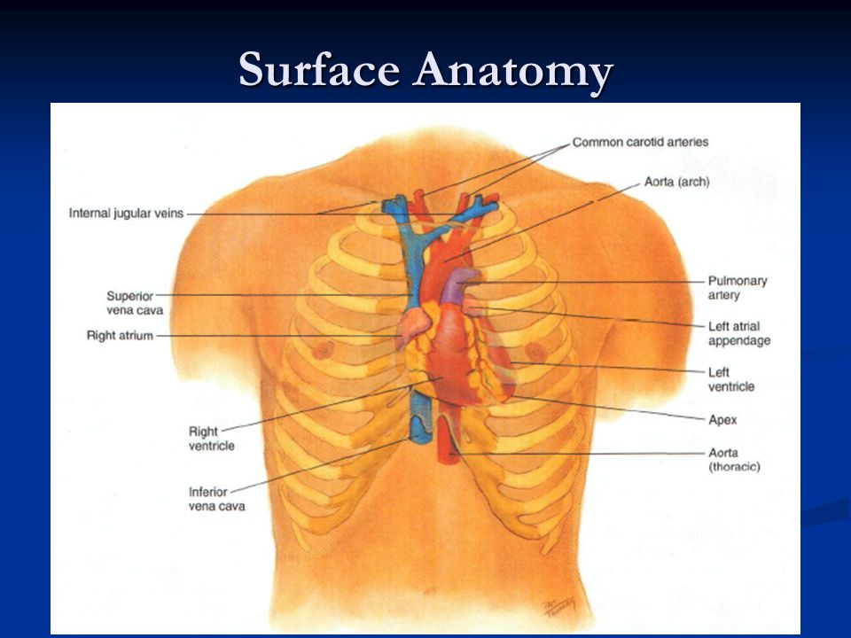 Question 4 The examiner has estimated the jugular venous pressure.