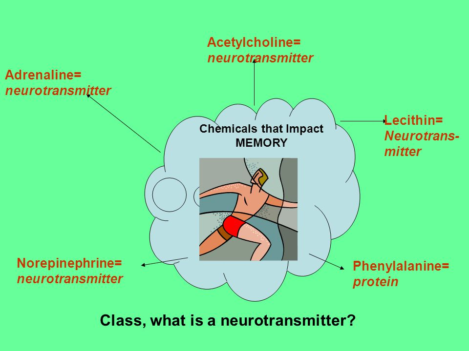 Adrenaline= neurotransmitter Acetylcholine= neurotransmitter Lecithin= Neurotrans- mitter Norepinephrine= neurotransmitter Phenylalanine= protein Chemicals that Impact MEMORY Class, what is a neurotransmitter