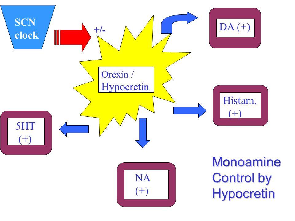 SCN clock DA (+) Histam. (+) NA (+) 5HT (+) Orexin / Hypocretin Monoamine Control by Hypocretin +/-