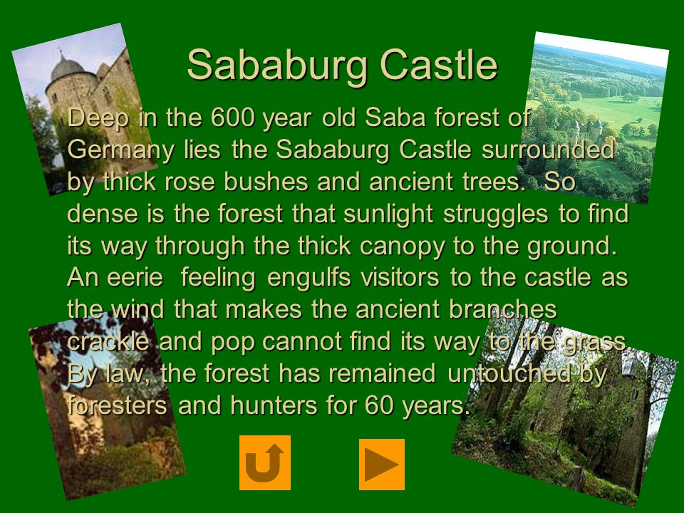 Deep in the 600 year old Saba forest of Germany lies the Sababurg Castle surrounded by thick rose bushes and ancient trees.
