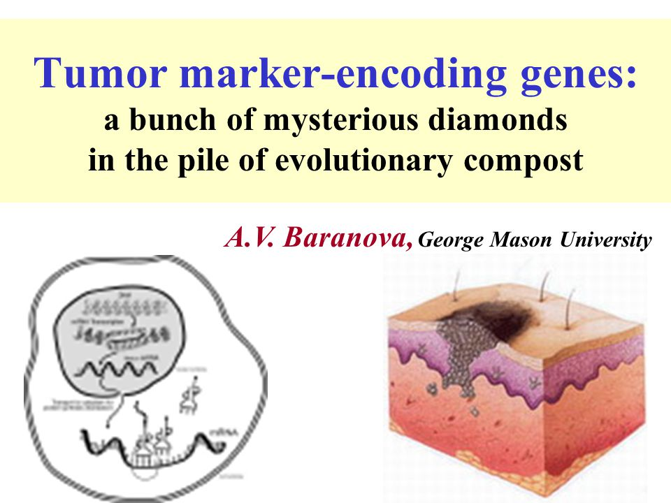 Tumor marker-encoding genes: a bunch of mysterious diamonds in the pile of evolutionary compost A.V. Baranova, George Mason University