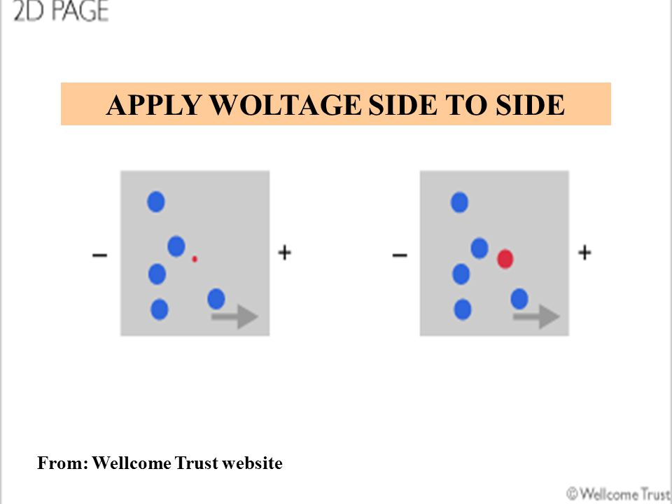 From: Wellcome Trust website APPLY WOLTAGE SIDE TO SIDE