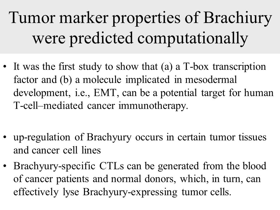Tumor marker properties of Brachiury were predicted computationally It was the first study to show that (a) a T-box transcription factor and (b) a molecule implicated in mesodermal development, i.e., EMT, can be a potential target for human T-cell–mediated cancer immunotherapy.