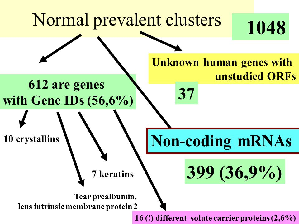 Normal prevalent clusters 612 are genes with Gene IDs (56,6%) 1048 10 crystallins 7 keratins Tear prealbumin, lens intrinsic membrane protein 2 Unknow