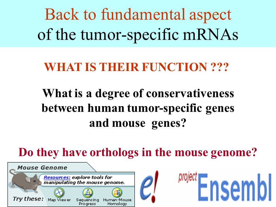 Back to fundamental aspect of the tumor-specific mRNAs What is a degree of conservativeness between human tumor-specific genes and mouse genes? Do the