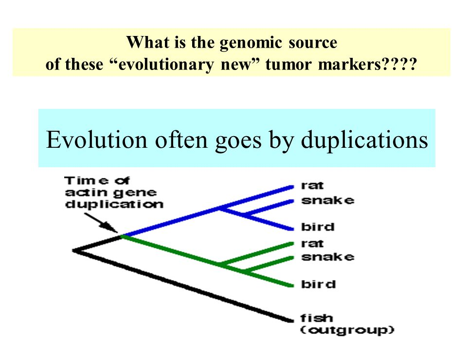 "Evolution often goes by duplications What is the genomic source of these ""evolutionary new"" tumor markers????"