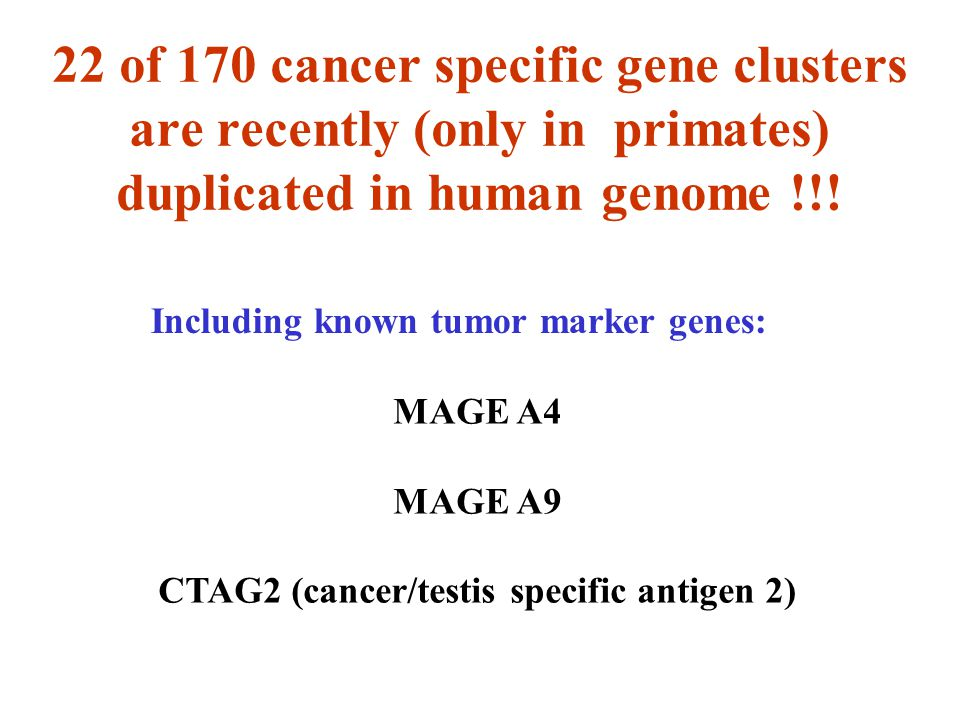 22 of 170 cancer specific gene clusters are recently (only in primates) duplicated in human genome !!! Including known tumor marker genes: MAGE A4 MAG