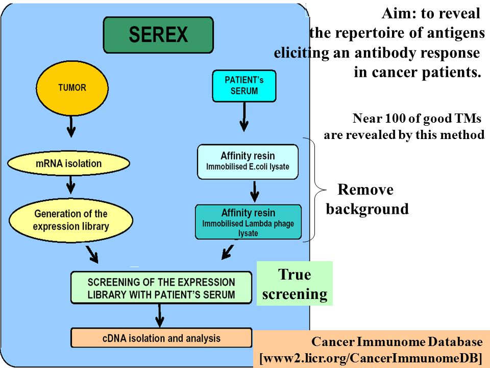 Remove background True screening Aim: to reveal the repertoire of antigens eliciting an antibody response in cancer patients.
