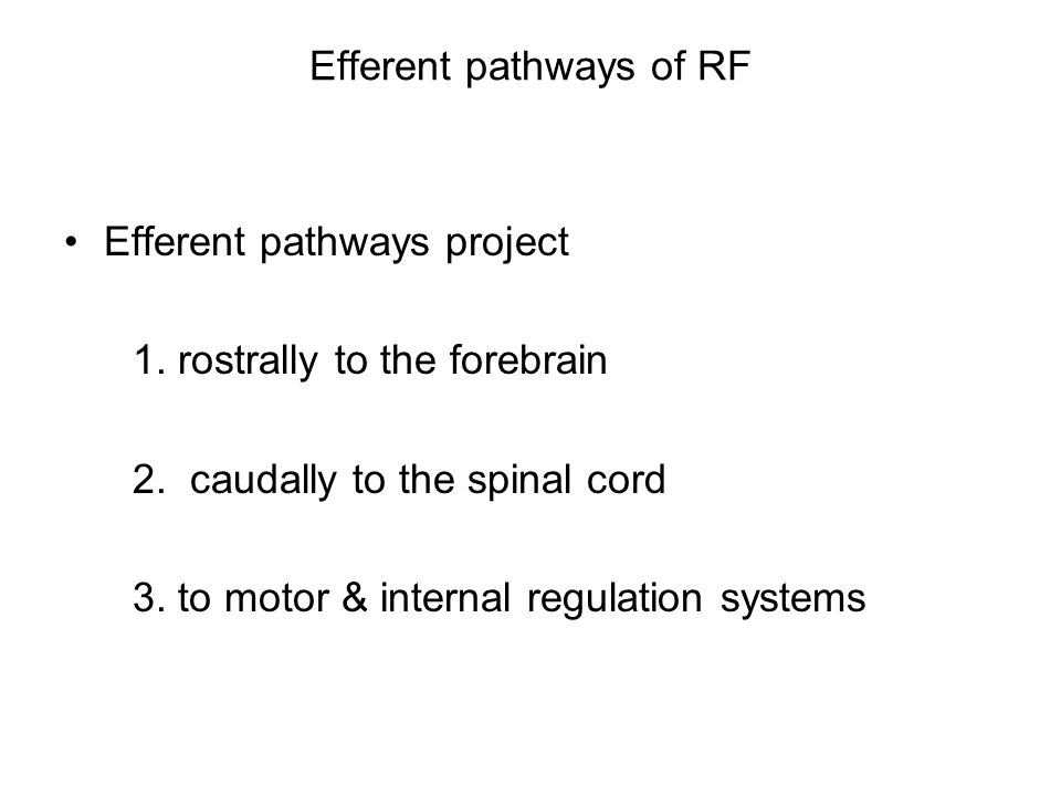 Efferent pathways of RF Efferent pathways project 1.