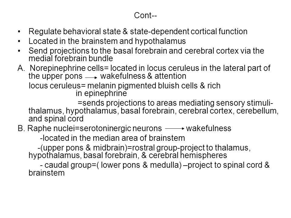 Cont-- Regulate behavioral state & state-dependent cortical function Located in the brainstem and hypothalamus Send projections to the basal forebrain and cerebral cortex via the medial forebrain bundle A.