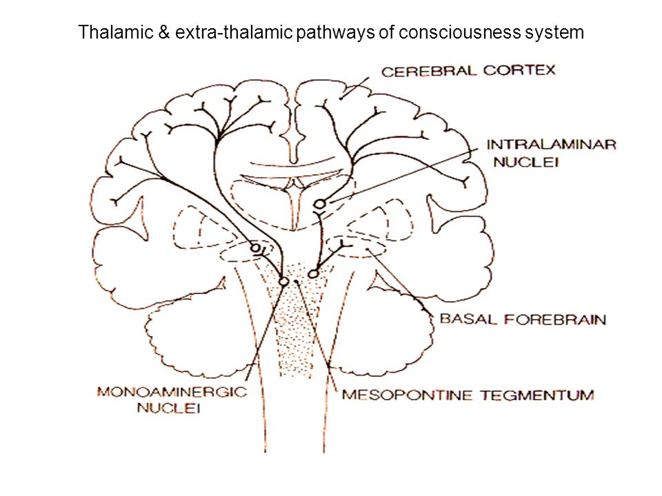 Thalamic & extra-thalamic pathways of consciousness system