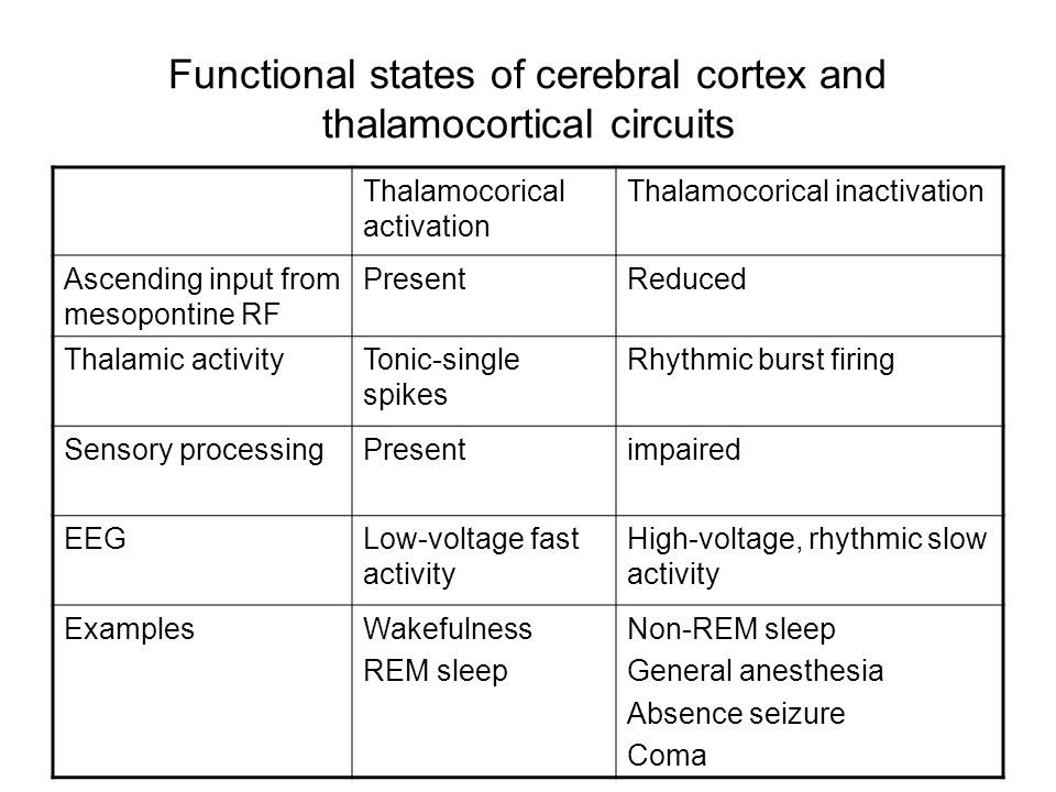 Functional states of cerebral cortex and thalamocortical circuits Thalamocorical activation Thalamocorical inactivation Ascending input from mesopontine RF PresentReduced Thalamic activityTonic-single spikes Rhythmic burst firing Sensory processingPresentimpaired EEGLow-voltage fast activity High-voltage, rhythmic slow activity ExamplesWakefulness REM sleep Non-REM sleep General anesthesia Absence seizure Coma