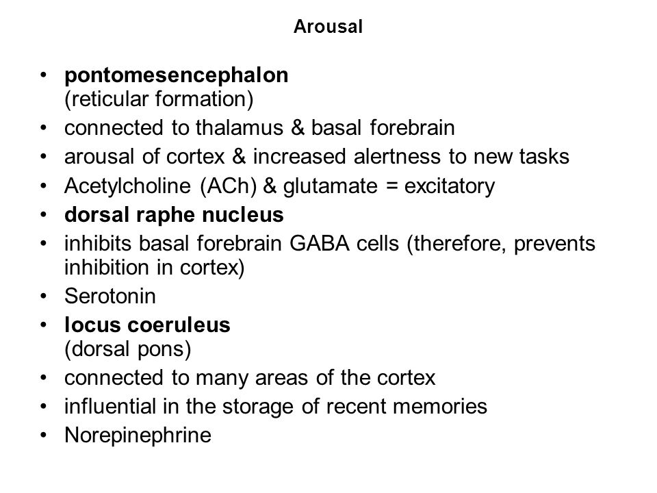 Arousal pontomesencephalon (reticular formation) connected to thalamus & basal forebrain arousal of cortex & increased alertness to new tasks Acetylcholine (ACh) & glutamate = excitatory dorsal raphe nucleus inhibits basal forebrain GABA cells (therefore, prevents inhibition in cortex) Serotonin locus coeruleus (dorsal pons) connected to many areas of the cortex influential in the storage of recent memories Norepinephrine