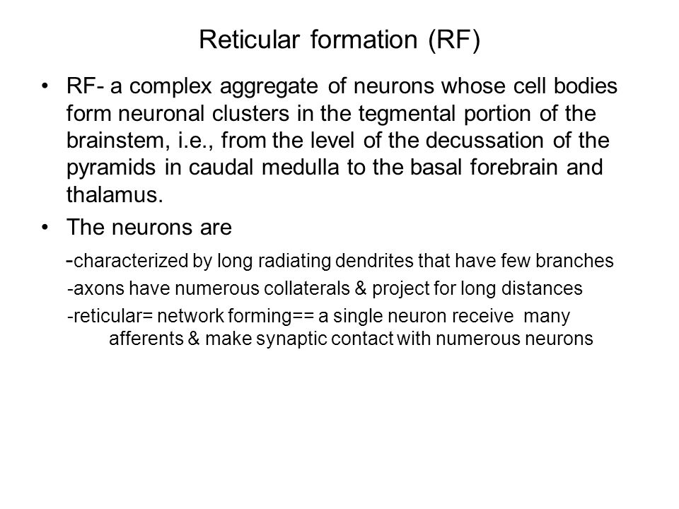 Reticular formation (RF) RF- a complex aggregate of neurons whose cell bodies form neuronal clusters in the tegmental portion of the brainstem, i.e., from the level of the decussation of the pyramids in caudal medulla to the basal forebrain and thalamus.