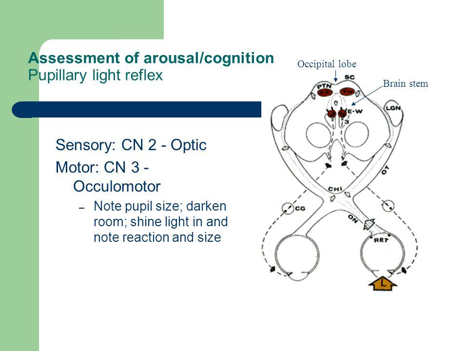 Assessment of arousal/cognition Pupillary light reflex Sensory: CN 2 - Optic Motor: CN 3 - Occulomotor – Note pupil size; darken room; shine light in
