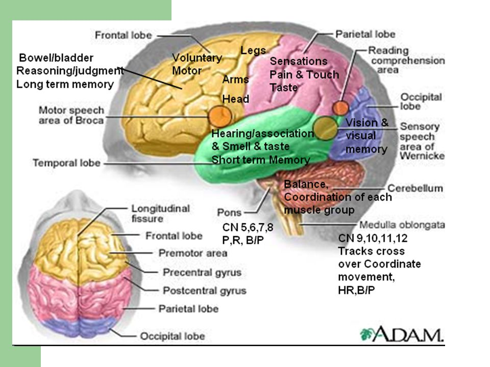 Common manifestations/Complications Coma states and brain death Irreversible coma- persistent vegetative state – Does not have functioning cerebral cortex – Caused by anoxia or severe brain injury – Sleep-wake cycles; chew/swallow/cough, no tracking Locked-in Syndrome (not true coma) – Functioning RAS & cortex; pons level interference – Aware, communicate with eyes Brain death – Loss of all brain function- flat EEG, no blood flow