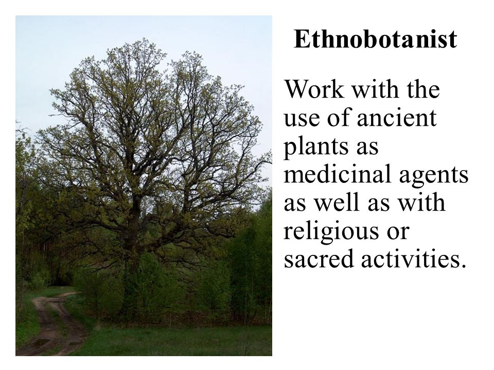 Ethnobotanist Work with the use of ancient plants as medicinal agents as well as with religious or sacred activities.