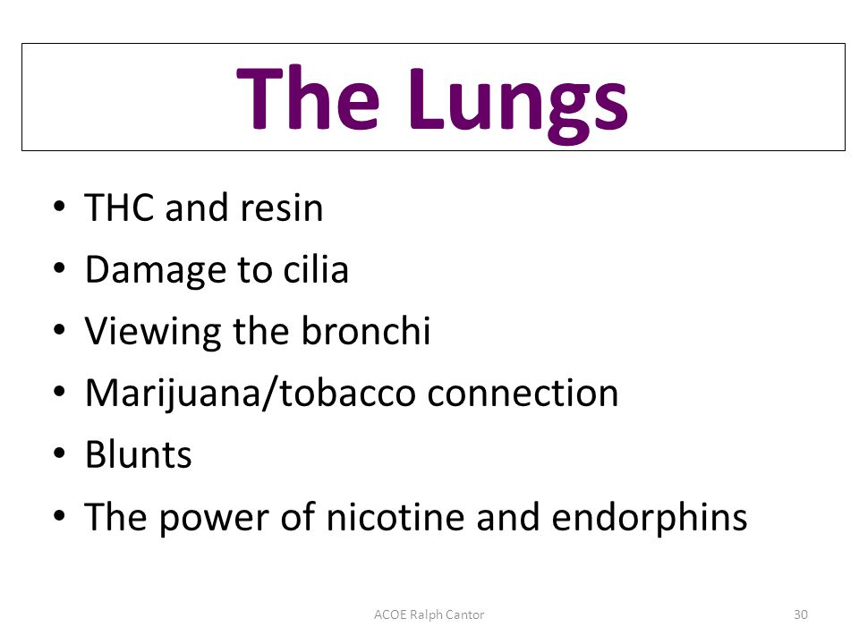 THC and resin Damage to cilia Viewing the bronchi Marijuana/tobacco connection Blunts The power of nicotine and endorphins ACOE Ralph Cantor30 The Lungs