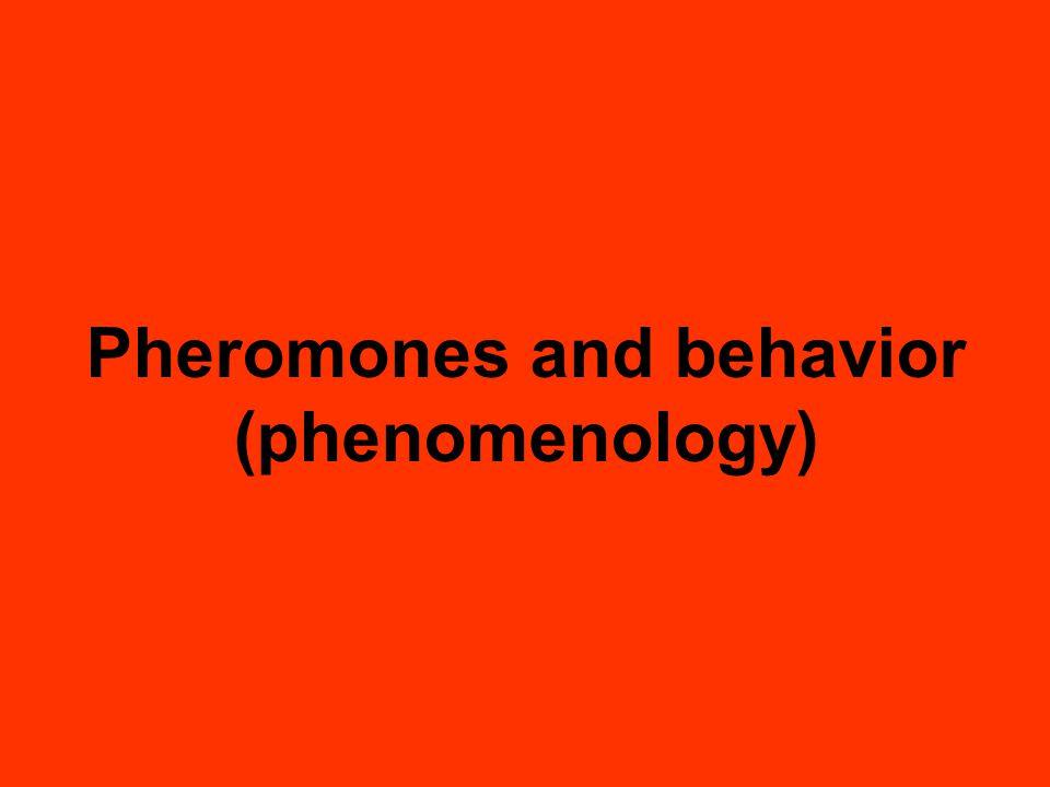 Pheromones and behavior (phenomenology)