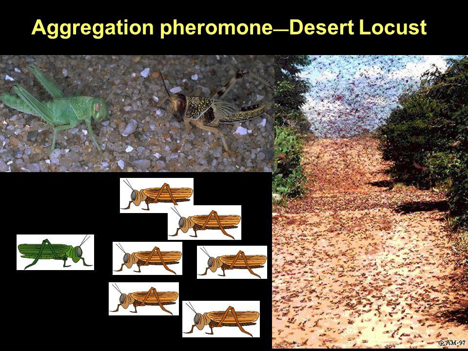 Aggregation pheromone — Desert Locust