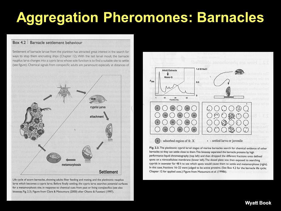 Aggregation Pheromones: Barnacles Wyatt Book