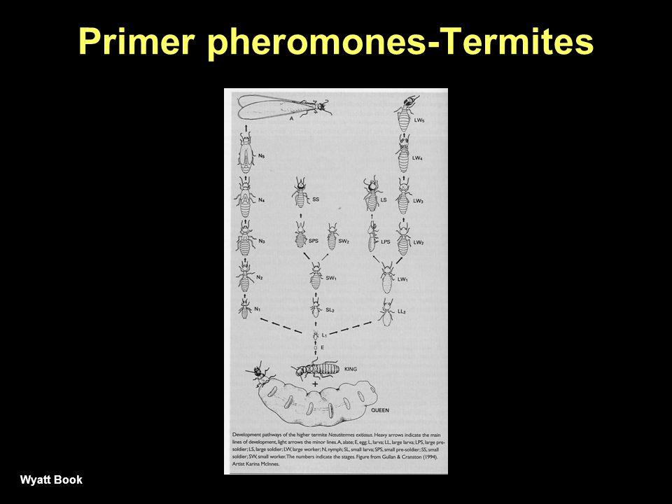 Primer pheromones-Termites Wyatt Book