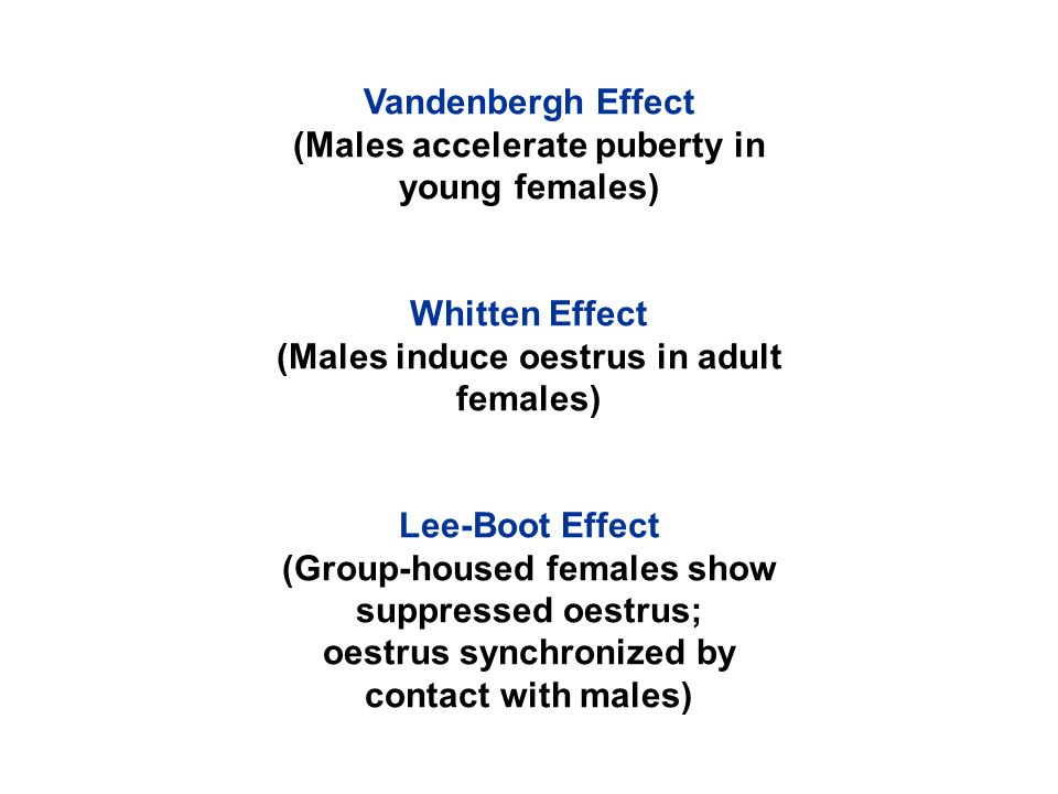 Vandenbergh Effect (Males accelerate puberty in young females) Whitten Effect (Males induce oestrus in adult females) Lee-Boot Effect (Group-housed females show suppressed oestrus; oestrus synchronized by contact with males)
