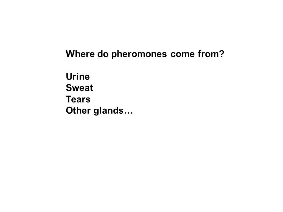 Where do pheromones come from Urine Sweat Tears Other glands…