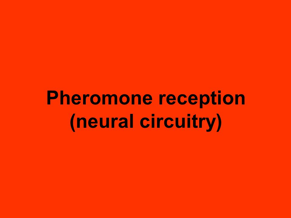 Pheromone reception (neural circuitry)